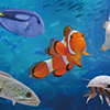 水に生きる100種類のいきものと出会う夏。ミニ水族館