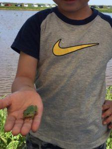 カエルと戯れる息子