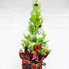 【週末工作教室】ミニクリスマスツリーをつくろう!