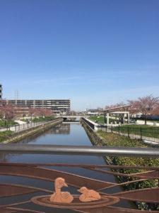 川沿いの桜並木、満開はいつかな?