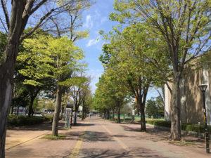 つくば市の中央を走るペデストリアンデッキは広くて美しい景観