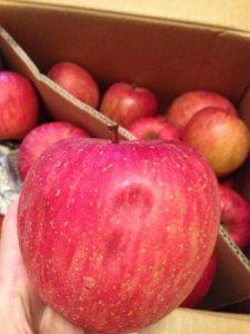 雹(ひょう)の被害でデコボコのりんごを選んで農家を応援!
