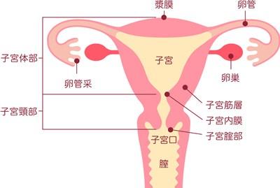 子宮の病気の原因と初期症状 知っておきたい!女性の病気と不妊 第一 ...